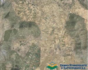 Αναστολή ανάρτησης δασικών χαρτών ζήτησε το ΠεΣυ Πελοποννήσου