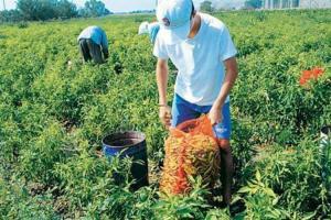 Πότε θα δοθεί η πρώτη δόση των αγροτικών επιδοτήσεων